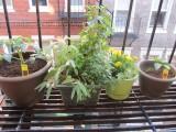 My urban garden in thecity