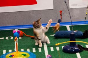 kitten at puppy bowl